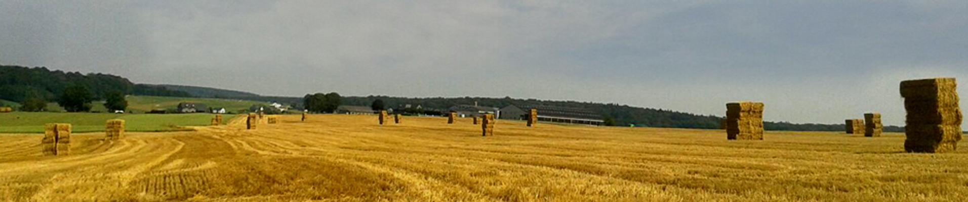 Gras maaien Farm Devos