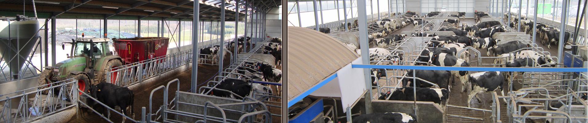 Robotstal bio melkveebedrijf