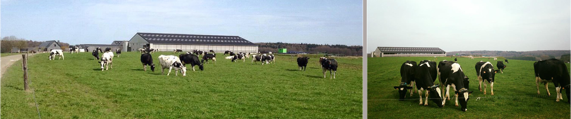 organic farm - bio melk